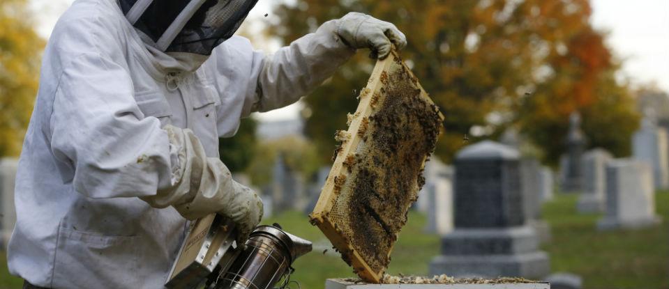 beekeepers960_450.jpg
